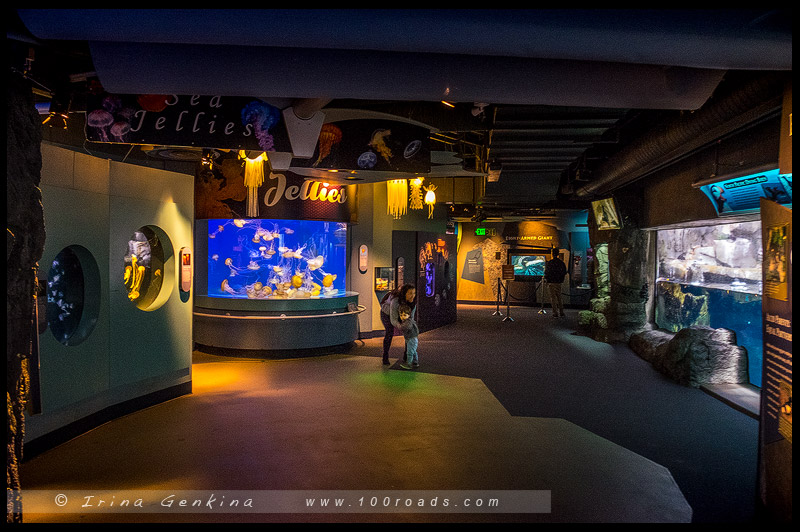 Aquarium Of The Pacific 100